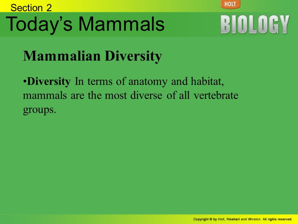 Section 2 Todays Mammals Mammalian Diversity Diversity In terms of anatomy and habitat, mammals are the most diverse of all vertebrate groups.