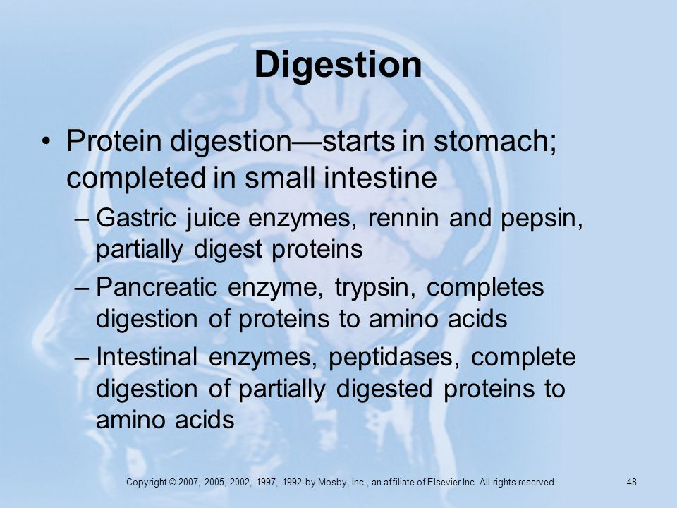 Copyright © 2007, 2005, 2002, 1997, 1992 by Mosby, Inc., an affiliate of Elsevier Inc. All rights reserved. 48 Digestion Protein digestionstarts in st