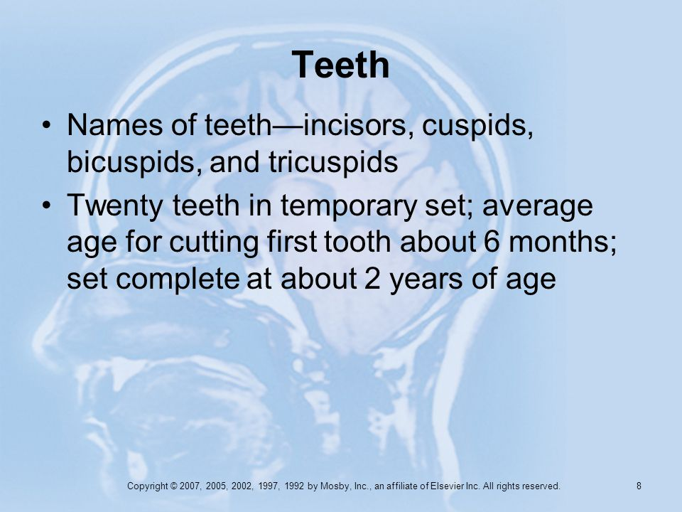 Copyright © 2007, 2005, 2002, 1997, 1992 by Mosby, Inc., an affiliate of Elsevier Inc. All rights reserved. 8 Teeth Names of teethincisors, cuspids, b