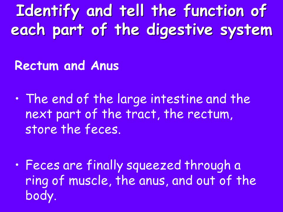 Identify and tell the function of each part of the digestive system Rectum and Anus The end of the large intestine and the next part of the tract, the