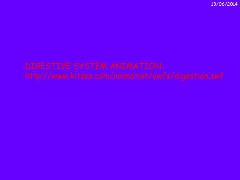 DIGESTIVE SYSTEM ANIMATION: http://www.kitses.com/animation/swfs/digestion.swf