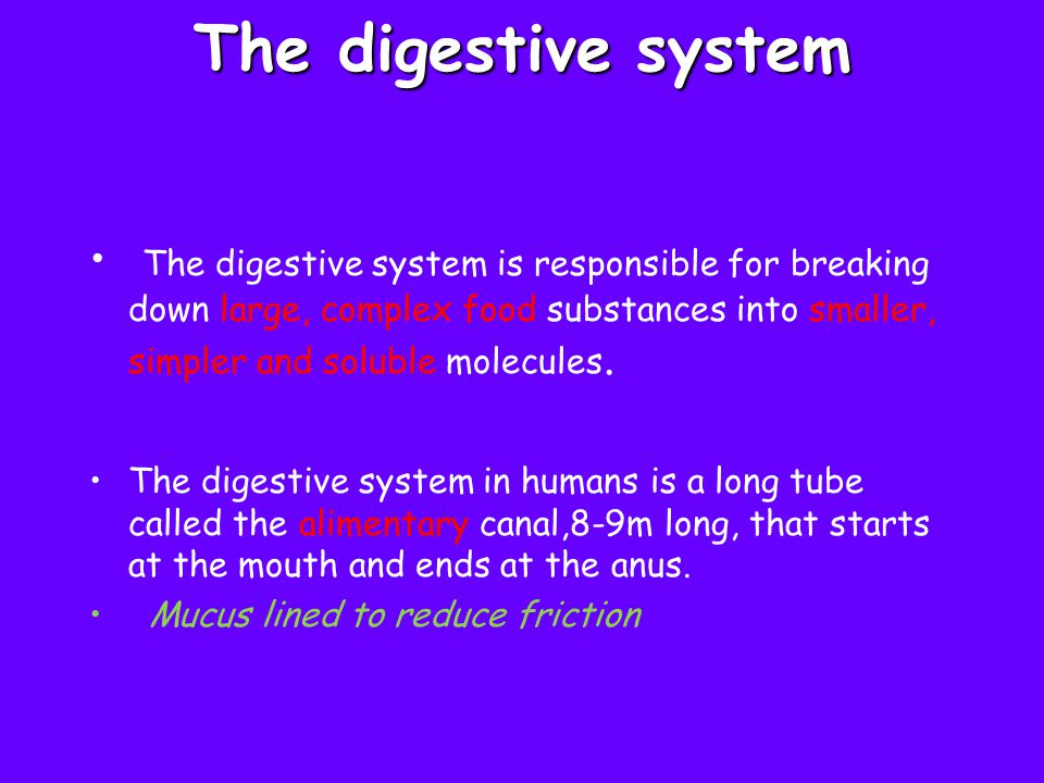To quiz yourself over the parts of the digestive system, go to website http://www.tvdsb.on.ca/westmin /science/sbi3a1/digest/digdiag.