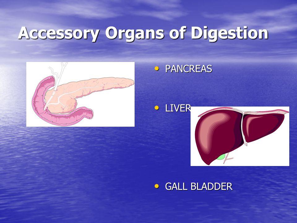 Accessory Organs of Digestion PANCREAS PANCREAS LIVER LIVER GALL BLADDER GALL BLADDER