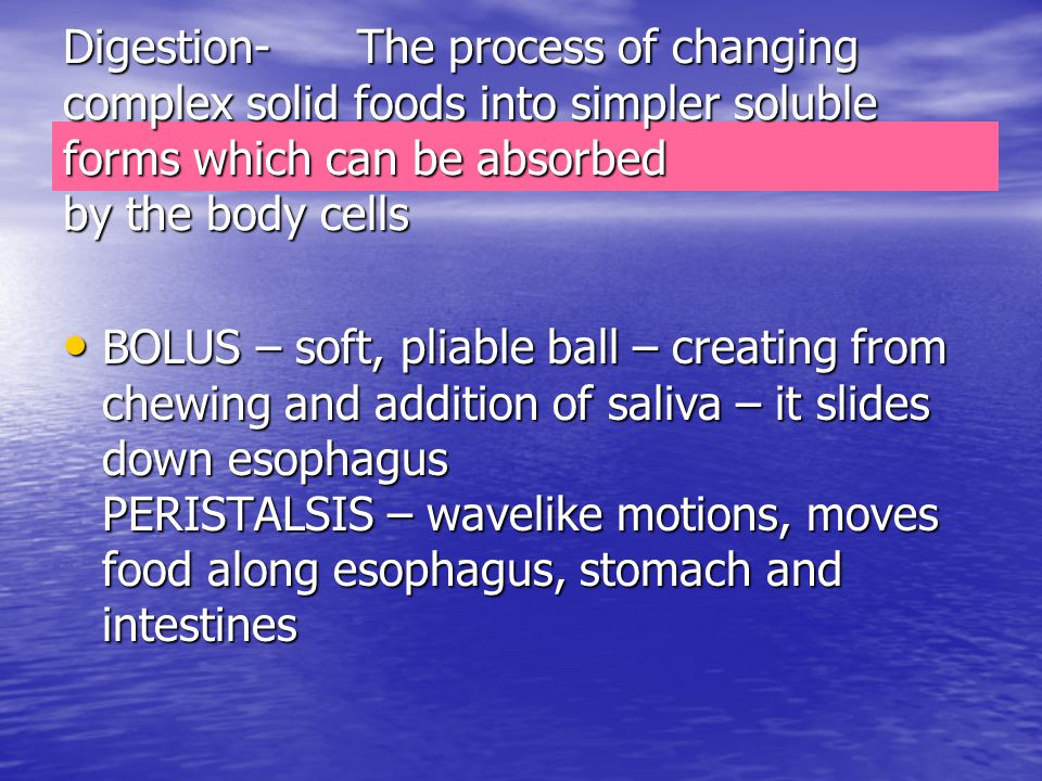 Digestion- The process of changing complex solid foods into simpler soluble forms which can be absorbed by the body cells BOLUS – soft, pliable ball –