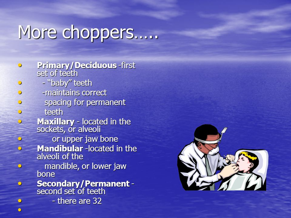 More choppers….. Primary/Deciduous -first set of teeth Primary/Deciduous -first set of teeth - baby teeth - baby teeth -maintains correct -maintains c