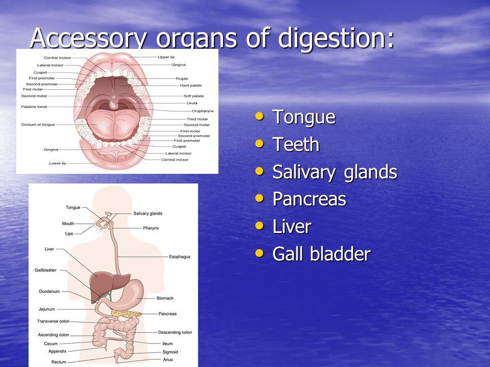 Accessory organs of digestion: Tongue Tongue Teeth Teeth Salivary glands Salivary glands Pancreas Pancreas Liver Liver Gall bladder Gall bladder