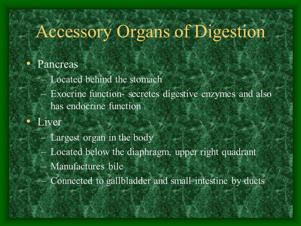 Accessory Organs of Digestion Pancreas –Located behind the stomach –Exocrine function- secretes digestive enzymes and also has endocrine function Live