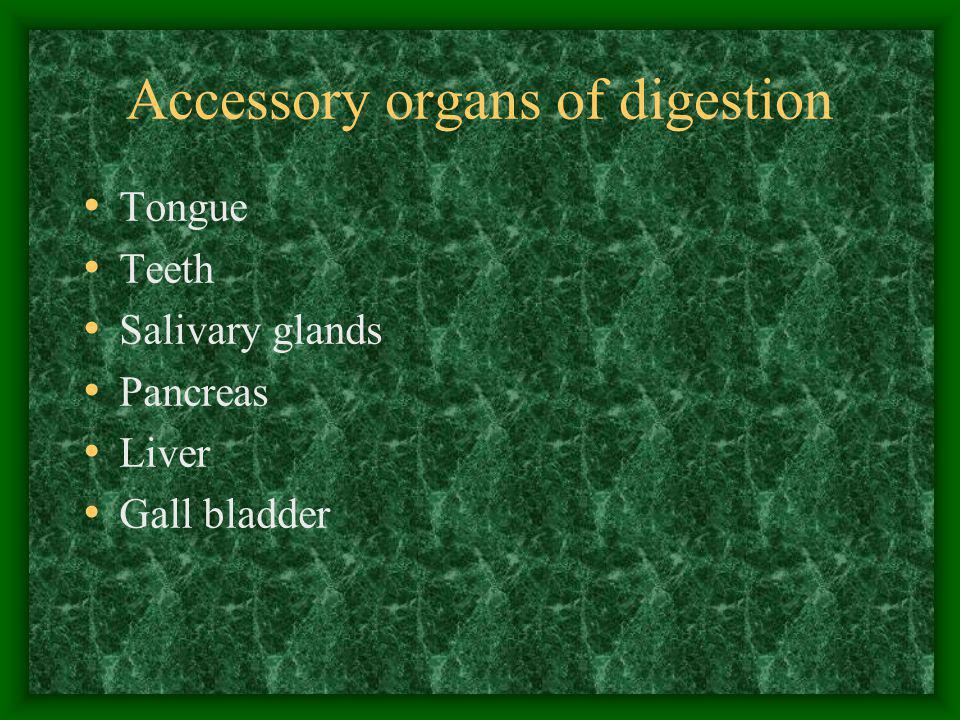 Accessory Organs of Digestion cont… Liver functions: –Produce and store glucose in the form of GLYGOGEN –Detoxify alcohol drugs and other harmful substances –Manufactures blood proteins –Stores Vitamins A, D, and B complex
