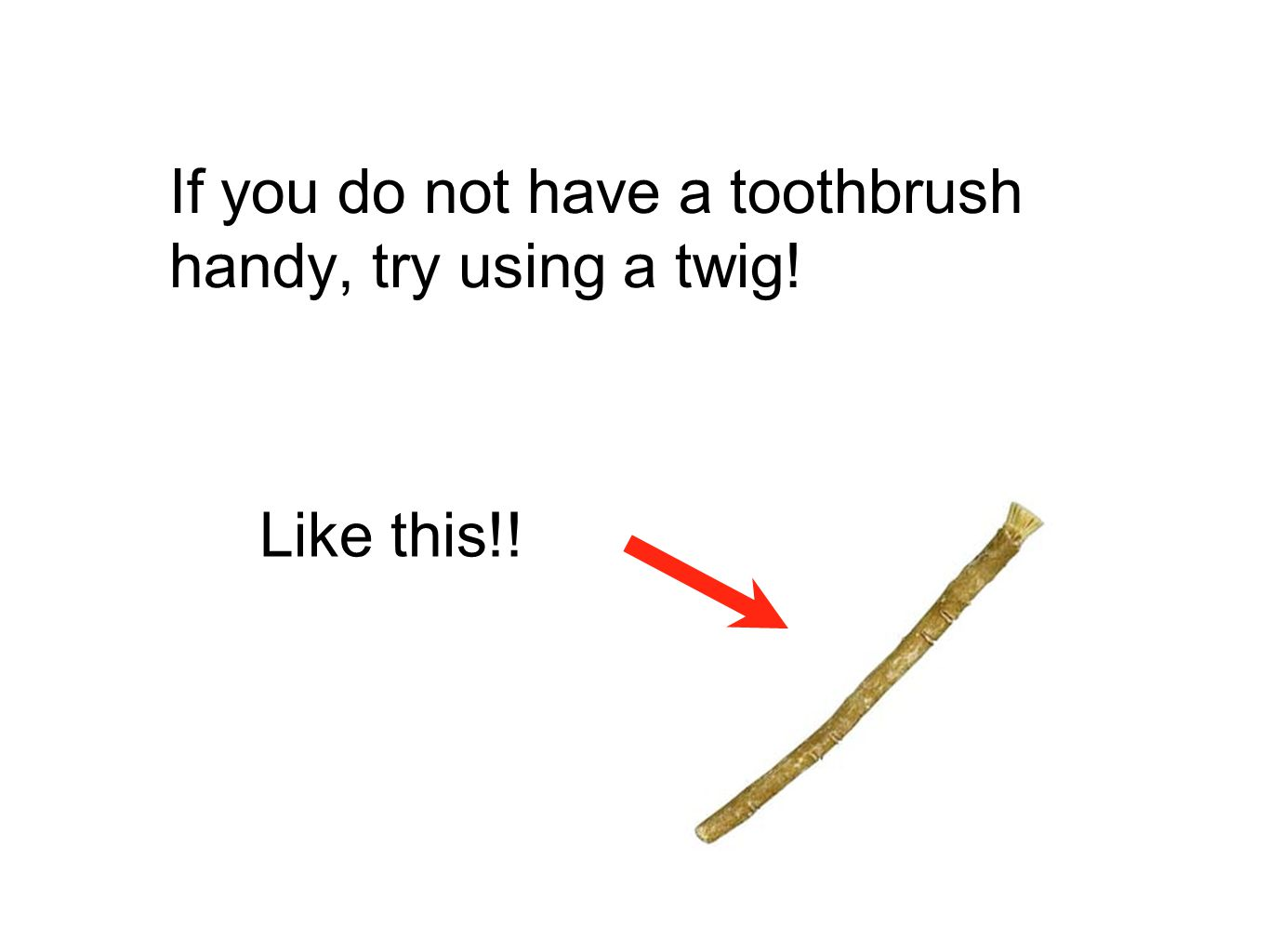 If you do not have a toothbrush handy, try using a twig! Like this!!