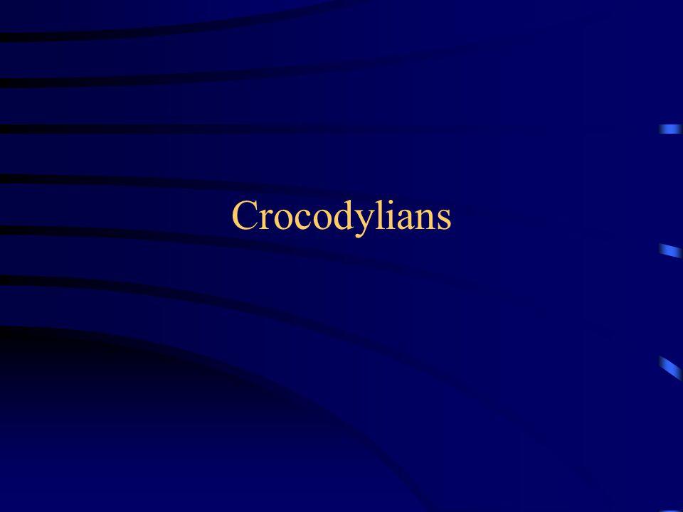 Crocodylians