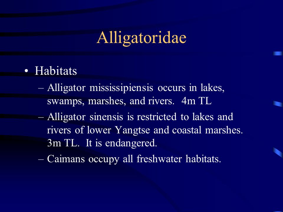 Alligatoridae Habitats –Alligator mississipiensis occurs in lakes, swamps, marshes, and rivers. 4m TL –Alligator sinensis is restricted to lakes and r