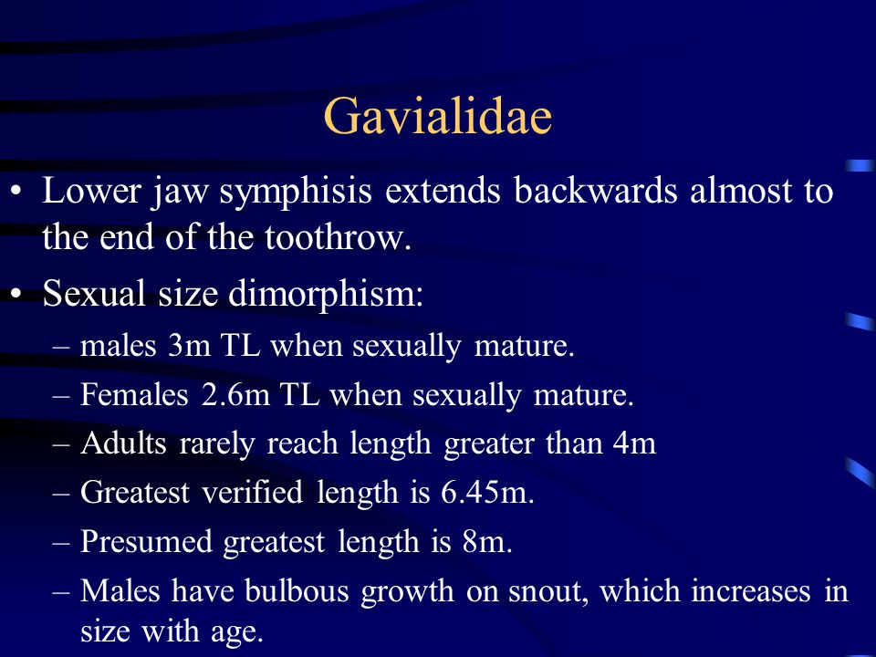 Gavialidae Lower jaw symphisis extends backwards almost to the end of the toothrow. Sexual size dimorphism: –males 3m TL when sexually mature. –Female