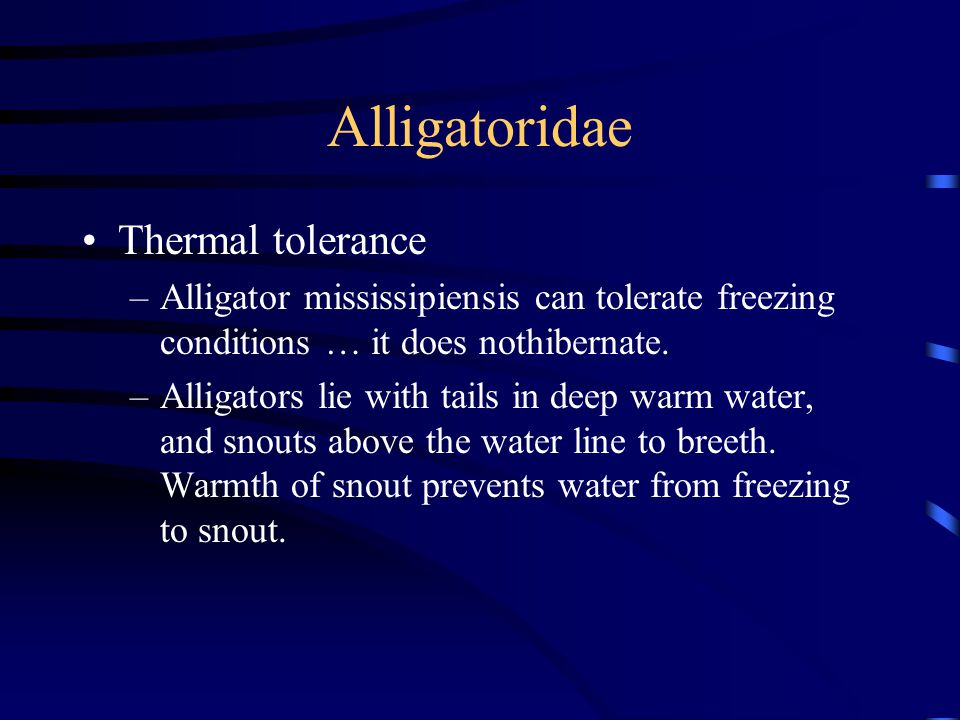 Alligatoridae Thermal tolerance –Alligator mississipiensis can tolerate freezing conditions … it does nothibernate. –Alligators lie with tails in deep