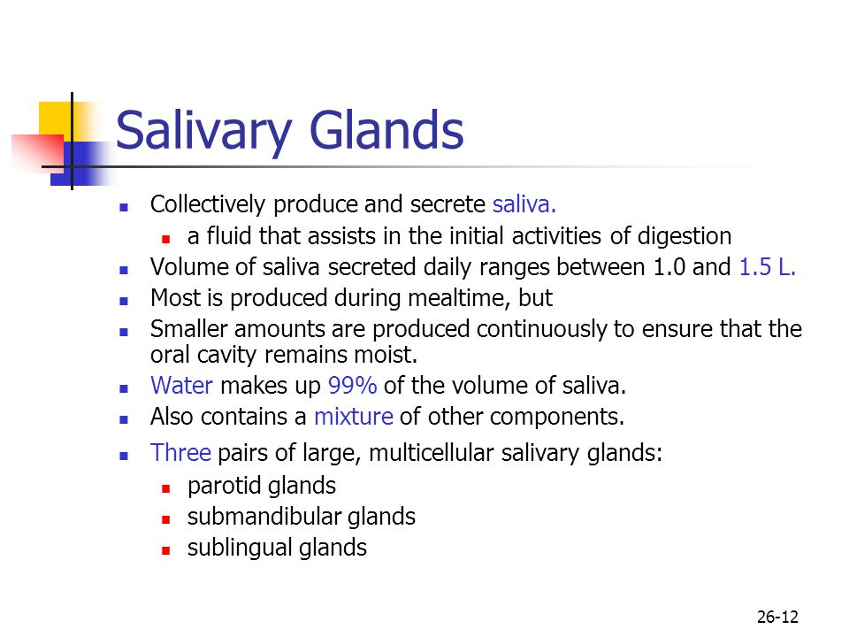 26-12 Salivary Glands Collectively produce and secrete saliva. a fluid that assists in the initial activities of digestion Volume of saliva secreted d