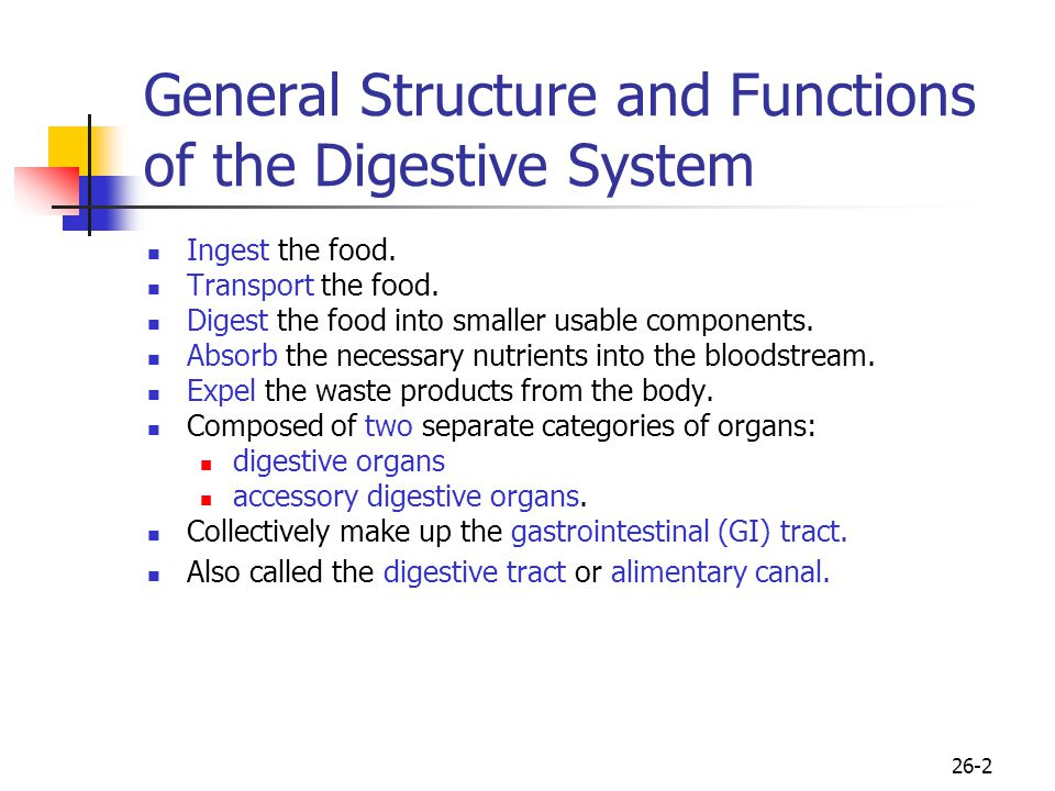 26-2 General Structure and Functions of the Digestive System Ingest the food. Transport the food. Digest the food into smaller usable components. Abso