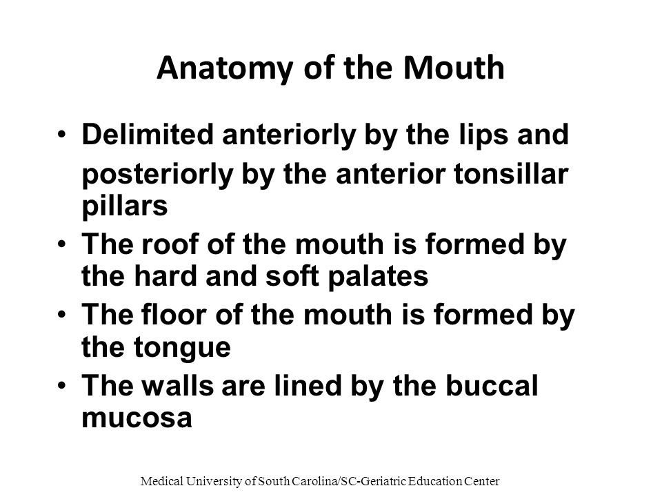 Medical University of South Carolina/SC-Geriatric Education Center Anatomy of the Mouth Delimited anteriorly by the lips and posteriorly by the anterior tonsillar pillars The roof of the mouth is formed by the hard and soft palates The floor of the mouth is formed by the tongue The walls are lined by the buccal mucosa