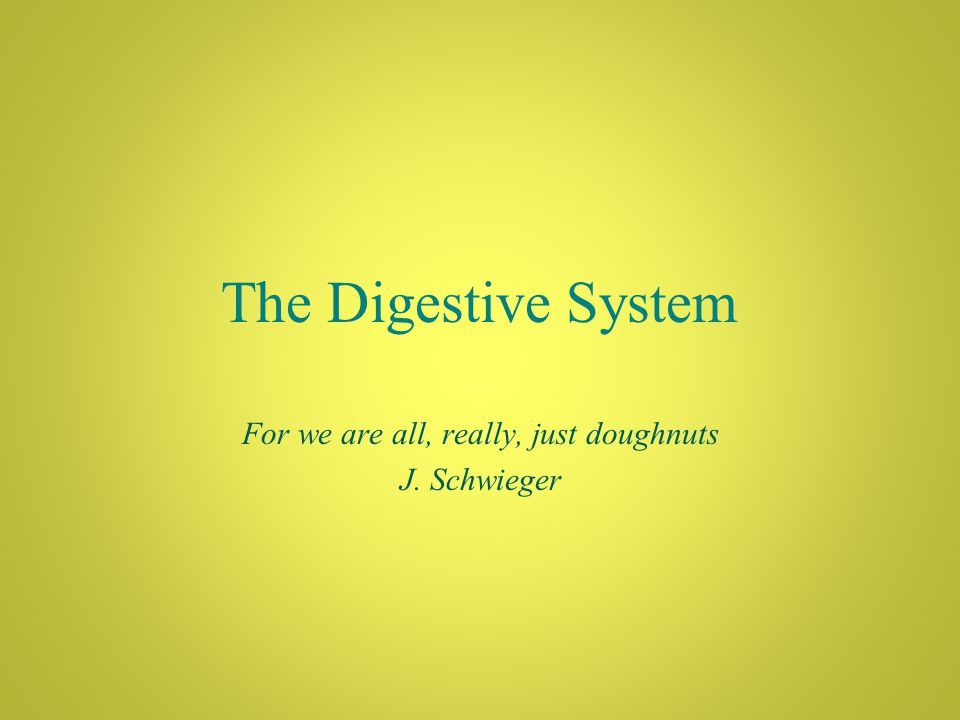 The Digestive System For we are all, really, just doughnuts J. Schwieger