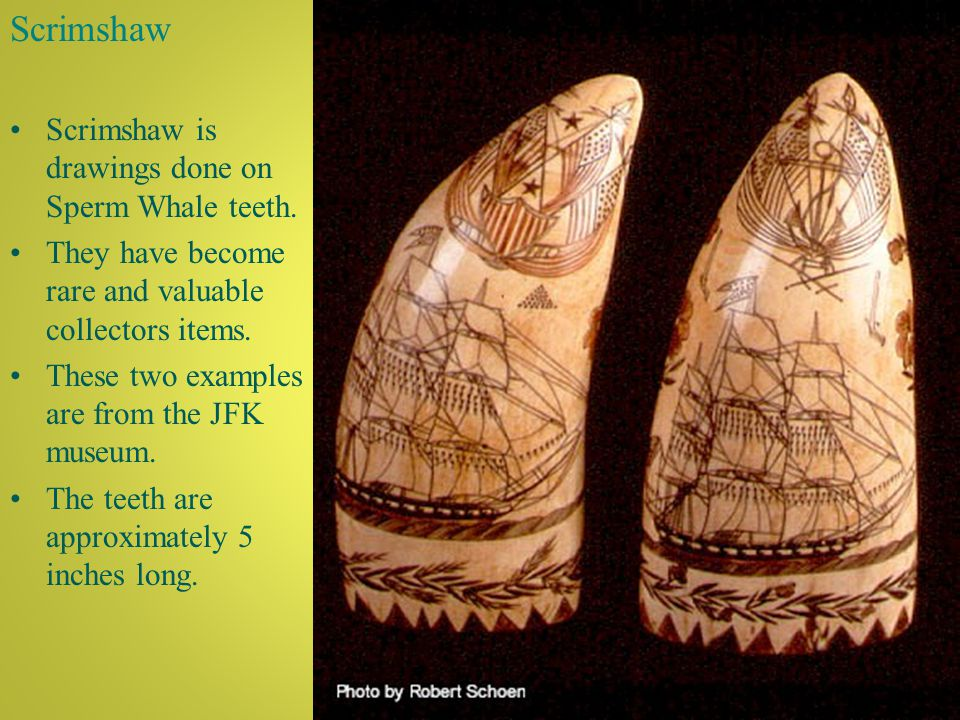 Scrimshaw Scrimshaw is drawings done on Sperm Whale teeth.