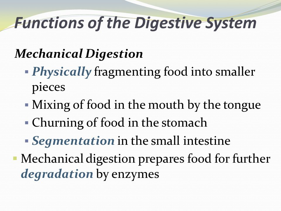 Functions of the Digestive System Mechanical Digestion Physically fragmenting food into smaller pieces Mixing of food in the mouth by the tongue Churning of food in the stomach Segmentation in the small intestine Mechanical digestion prepares food for further degradation by enzymes