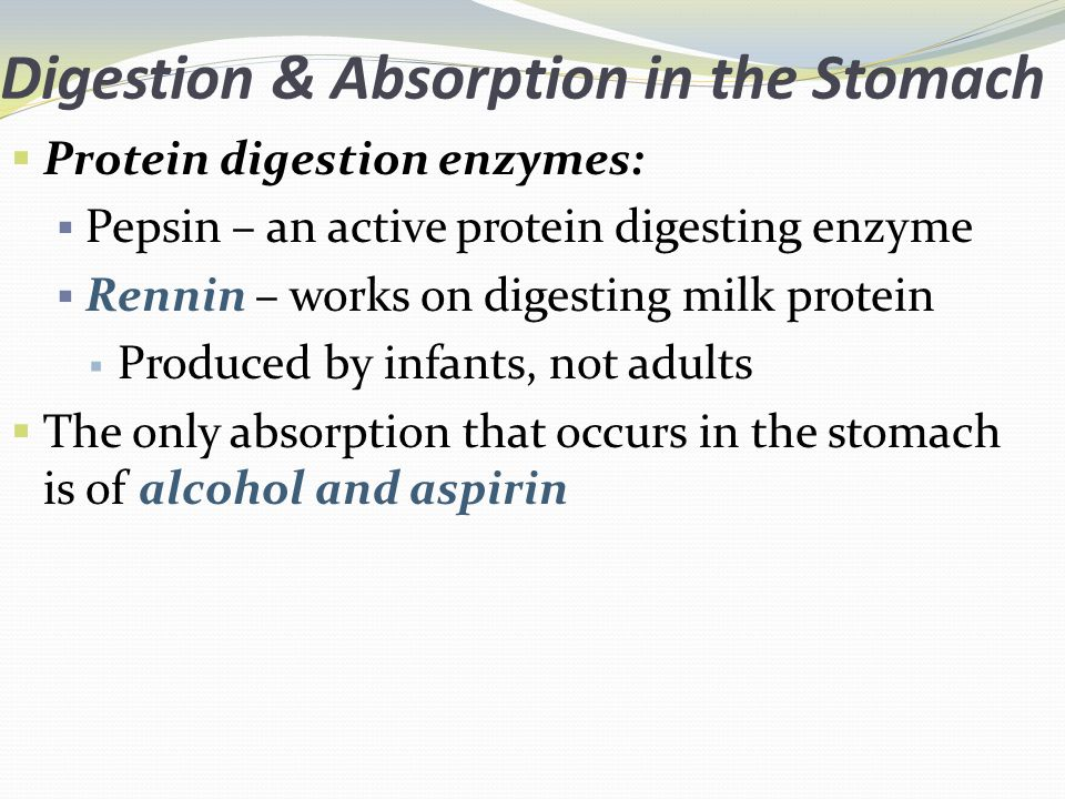 Digestion & Absorption in the Stomach Protein digestion enzymes: Pepsin – an active protein digesting enzyme Rennin – works on digesting milk protein Produced by infants, not adults The only absorption that occurs in the stomach is of alcohol and aspirin