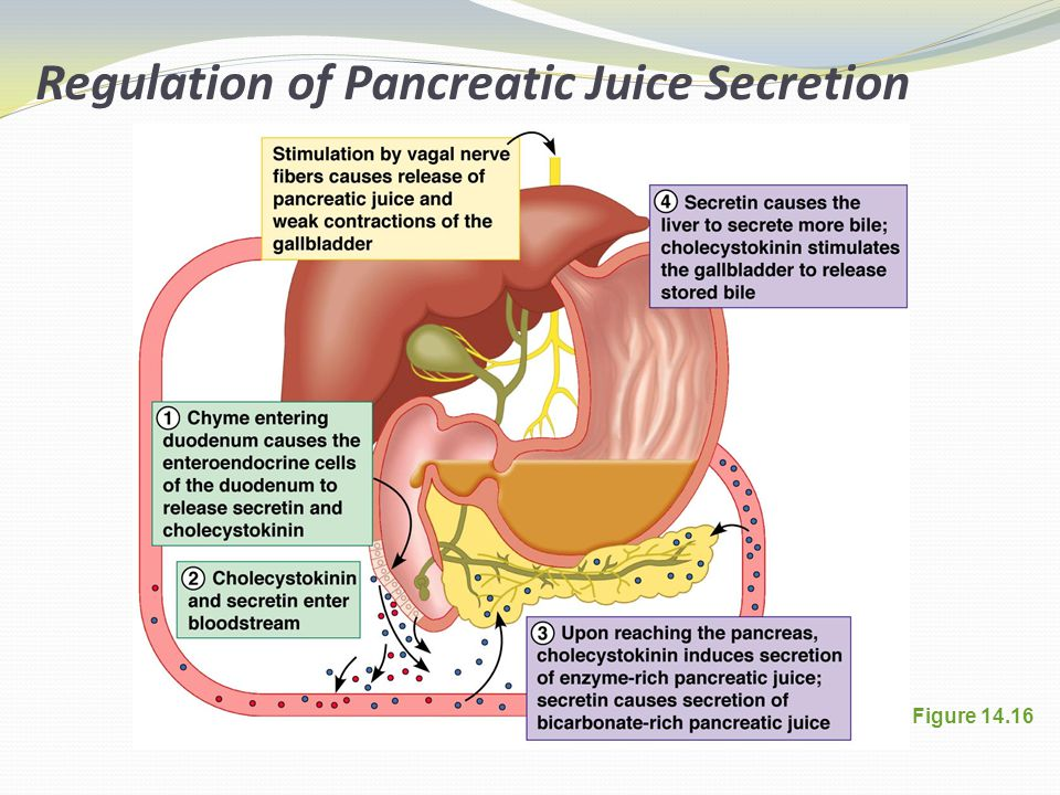 Figure 14.16 Regulation of Pancreatic Juice Secretion
