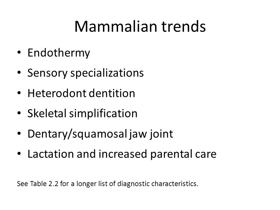Mammalian trends Endothermy Sensory specializations Heterodont dentition Skeletal simplification Dentary/squamosal jaw joint Lactation and increased p