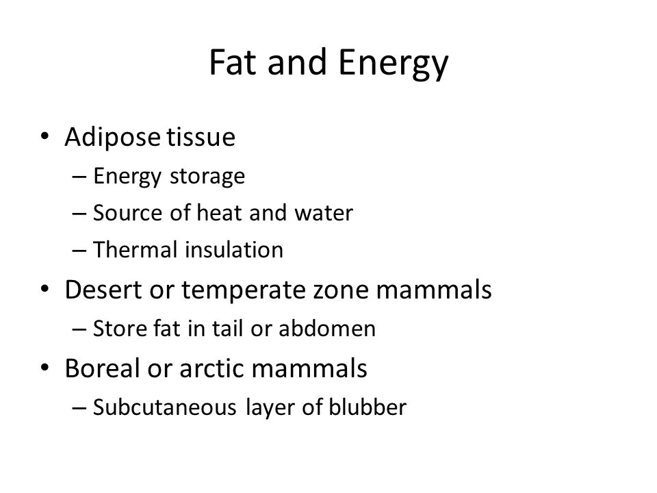 Fat and Energy Adipose tissue – Energy storage – Source of heat and water – Thermal insulation Desert or temperate zone mammals – Store fat in tail or