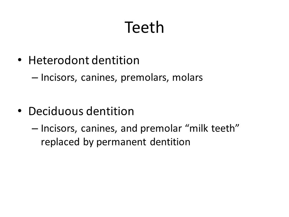 Teeth Heterodont dentition – Incisors, canines, premolars, molars Deciduous dentition – Incisors, canines, and premolar milk teeth replaced by permane