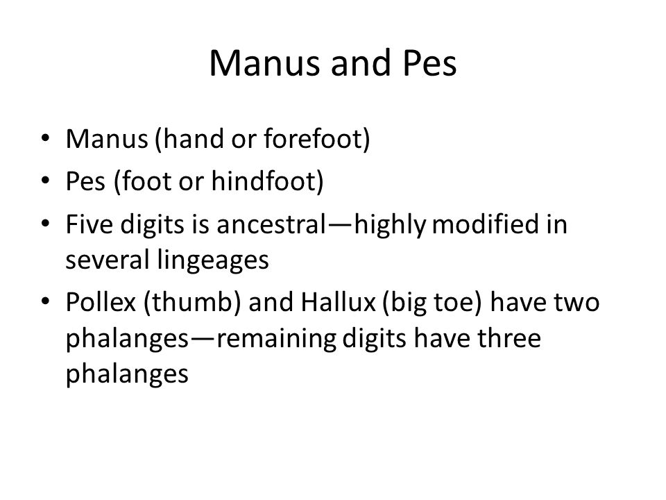 Manus and Pes Manus (hand or forefoot) Pes (foot or hindfoot) Five digits is ancestralhighly modified in several lingeages Pollex (thumb) and Hallux (