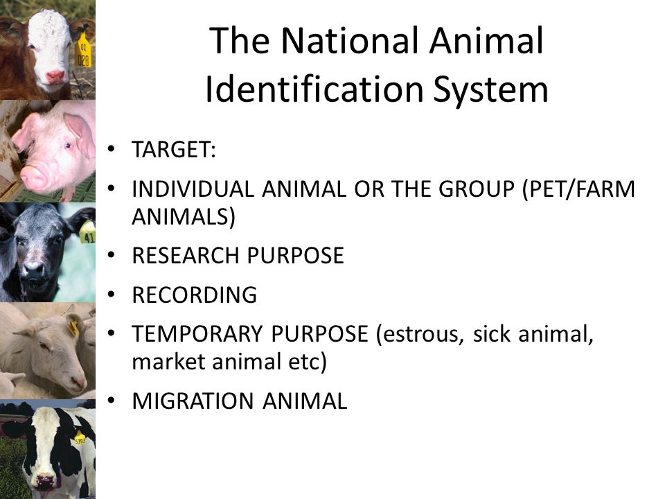 The National Animal Identification System TARGET: INDIVIDUAL ANIMAL OR THE GROUP (PET/FARM ANIMALS) RESEARCH PURPOSE RECORDING TEMPORARY PURPOSE (estrous, sick animal, market animal etc) MIGRATION ANIMAL