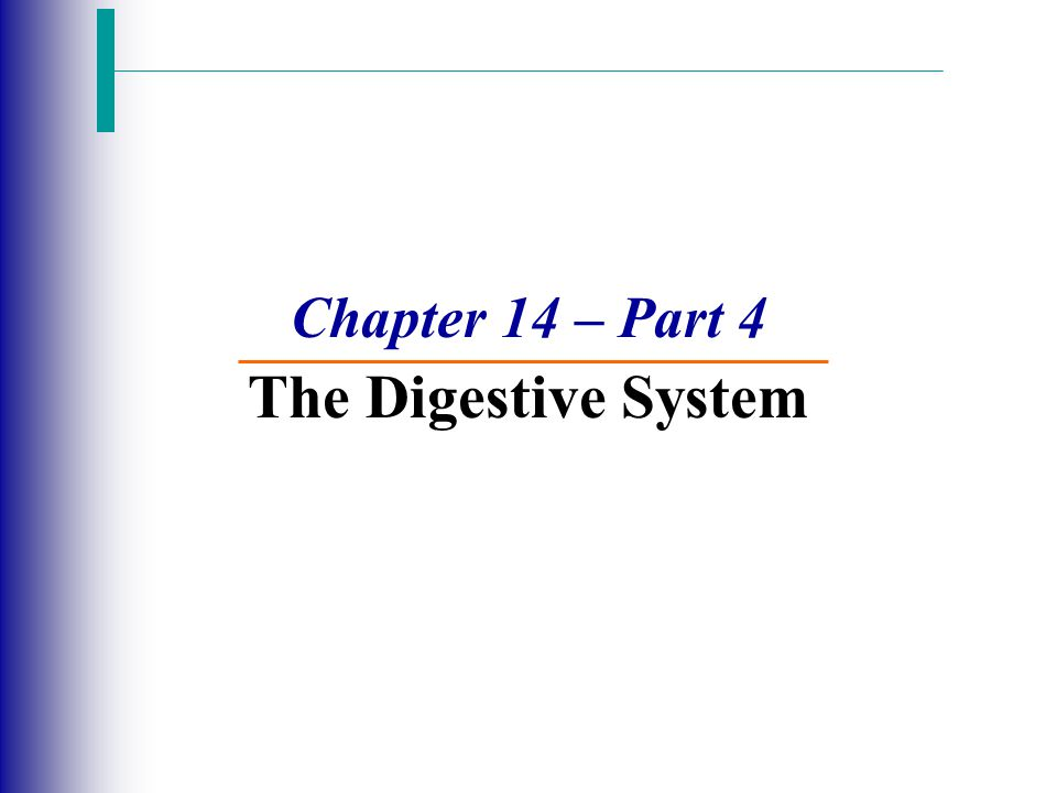 Processes of the Digestive System Ingestion – Getting food into the mouth Active, voluntary process