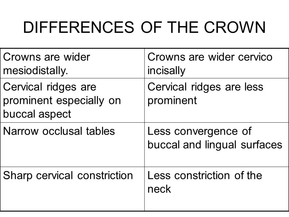 DIFFERENCES OF THE CROWN Crowns are wider mesiodistally. Crowns are wider cervico incisally Cervical ridges are prominent especially on buccal aspect