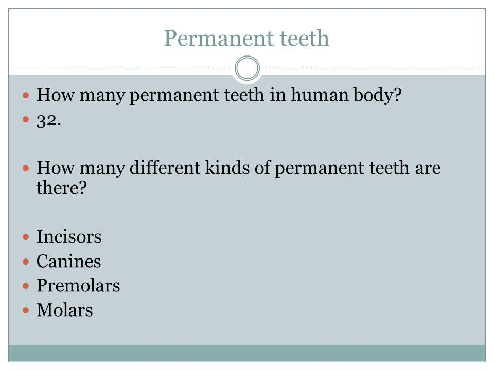 Permanent teeth How many permanent teeth in human body? 32. How many different kinds of permanent teeth are there? Incisors Canines Premolars Molars
