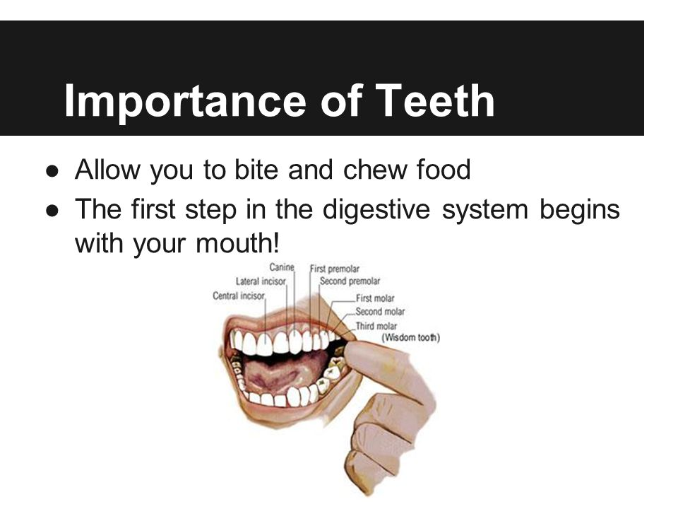 Importance of Teeth Allow you to bite and chew food The first step in the digestive system begins with your mouth!