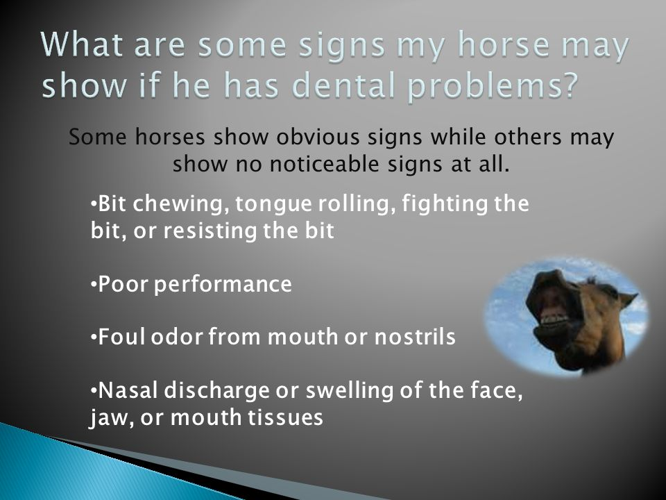 How will I know if my horse has a dental problem? Horses with dental problems may show obvious signs such as pain or irritation, or they may show no n