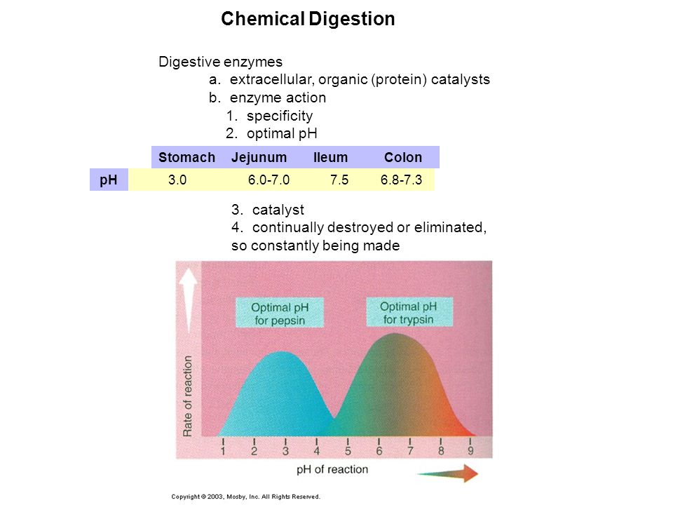 Chemical Digestion Digestive enzymes a. extracellular, organic (protein) catalysts b. enzyme action 1. specificity 2. optimal pH StomachJejunumIleumCo
