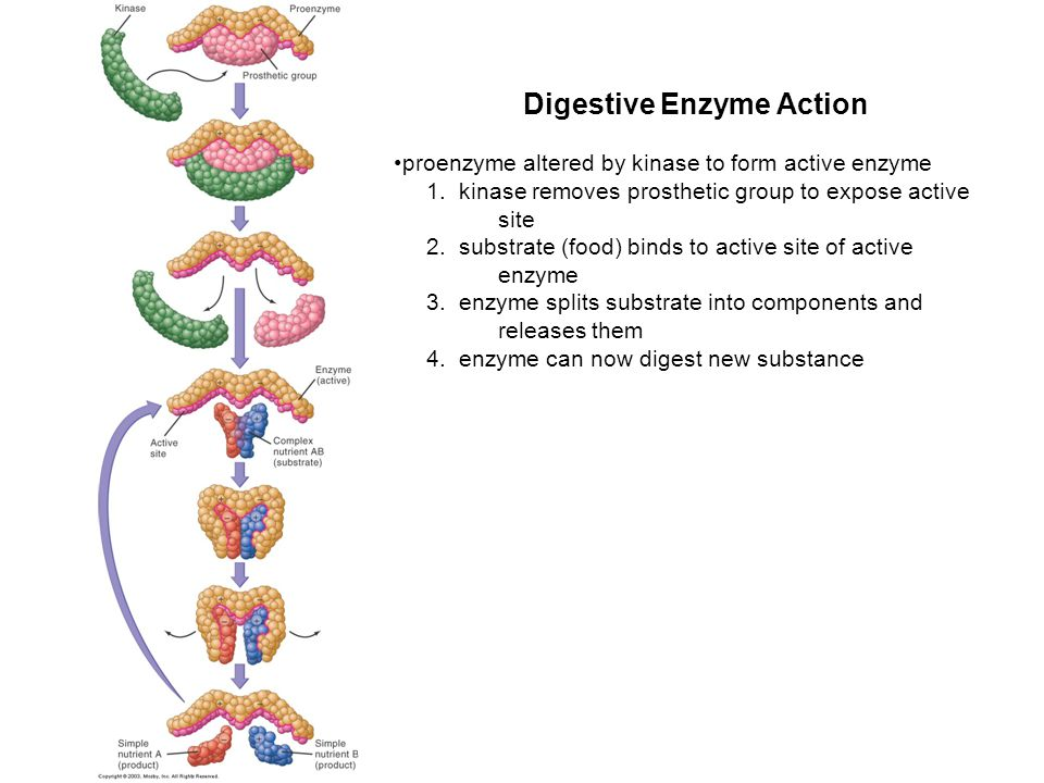 Digestive Enzyme Action proenzyme altered by kinase to form active enzyme 1. kinase removes prosthetic group to expose active site 2. substrate (food)