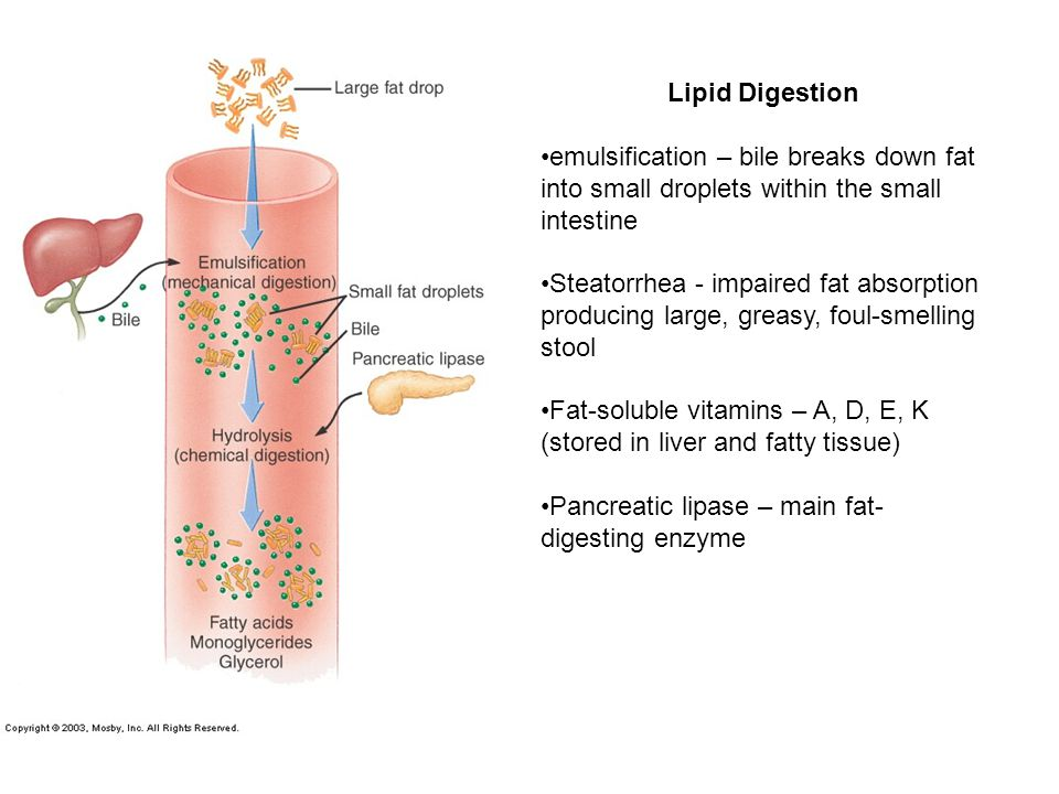Lipid Digestion emulsification – bile breaks down fat into small droplets within the small intestine Steatorrhea - impaired fat absorption producing large, greasy, foul-smelling stool Fat-soluble vitamins – A, D, E, K (stored in liver and fatty tissue) Pancreatic lipase – main fat- digesting enzyme