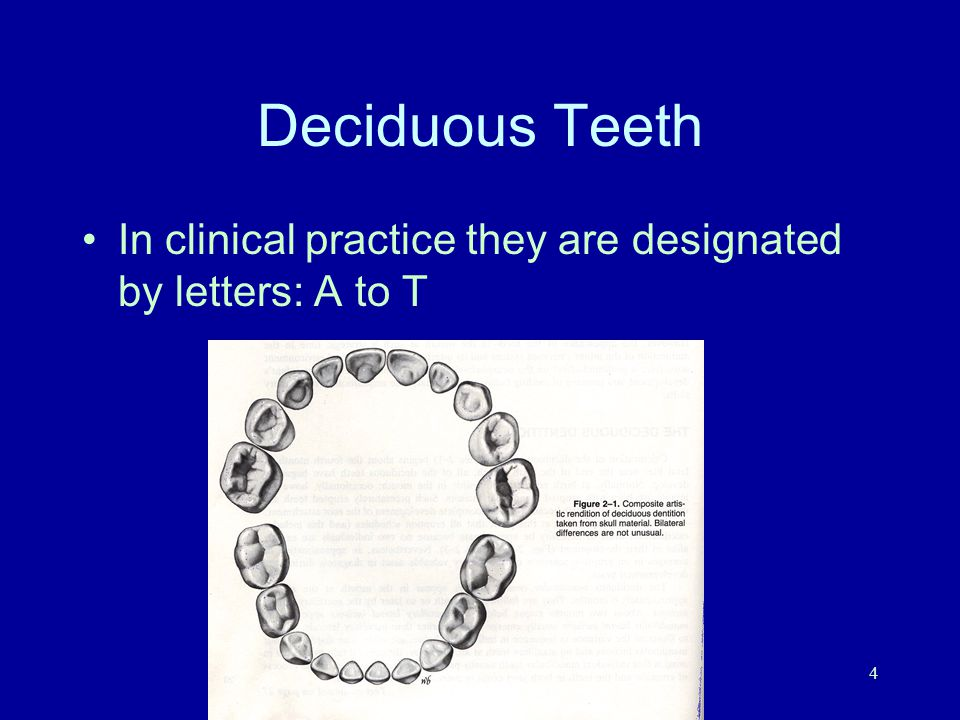 M.E. Mermigas, DDS4 Deciduous Teeth In clinical practice they are designated by letters: A to T
