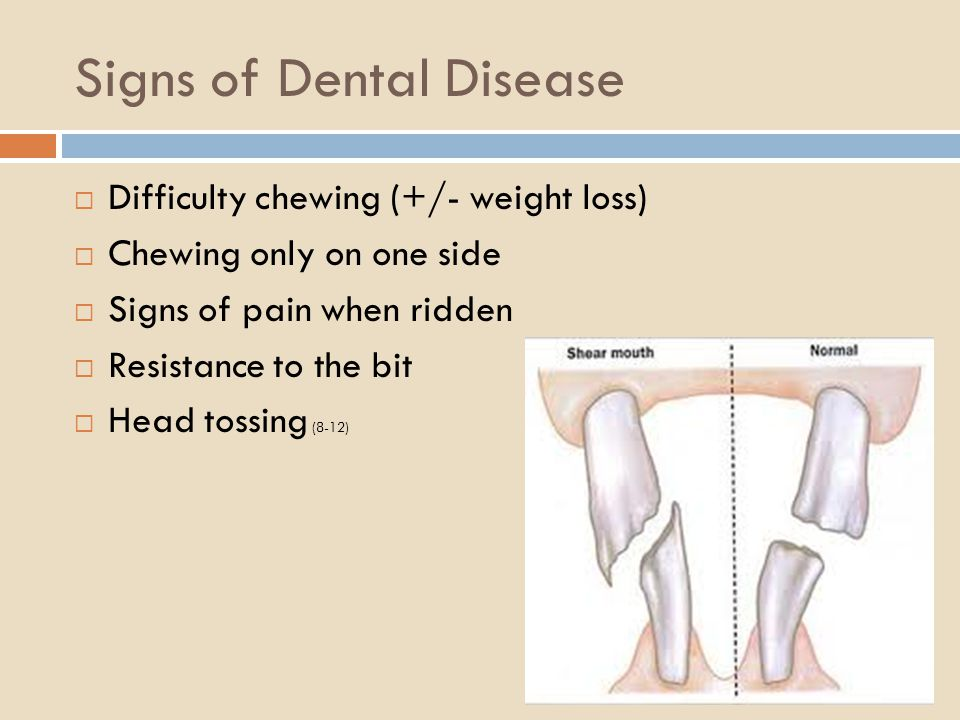 Signs of Dental Disease Difficulty chewing (+/- weight loss) Chewing only on one side Signs of pain when ridden Resistance to the bit Head tossing (8-12)