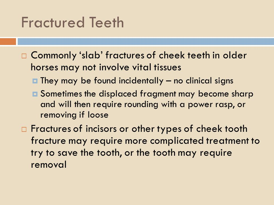 Fractured Teeth Commonly slab fractures of cheek teeth in older horses may not involve vital tissues They may be found incidentally – no clinical sign