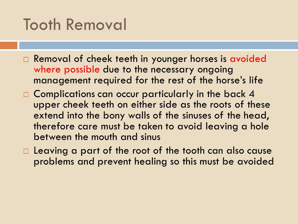Tooth Removal Removal of cheek teeth in younger horses is avoided where possible due to the necessary ongoing management required for the rest of the horses life Complications can occur particularly in the back 4 upper cheek teeth on either side as the roots of these extend into the bony walls of the sinuses of the head, therefore care must be taken to avoid leaving a hole between the mouth and sinus Leaving a part of the root of the tooth can also cause problems and prevent healing so this must be avoided