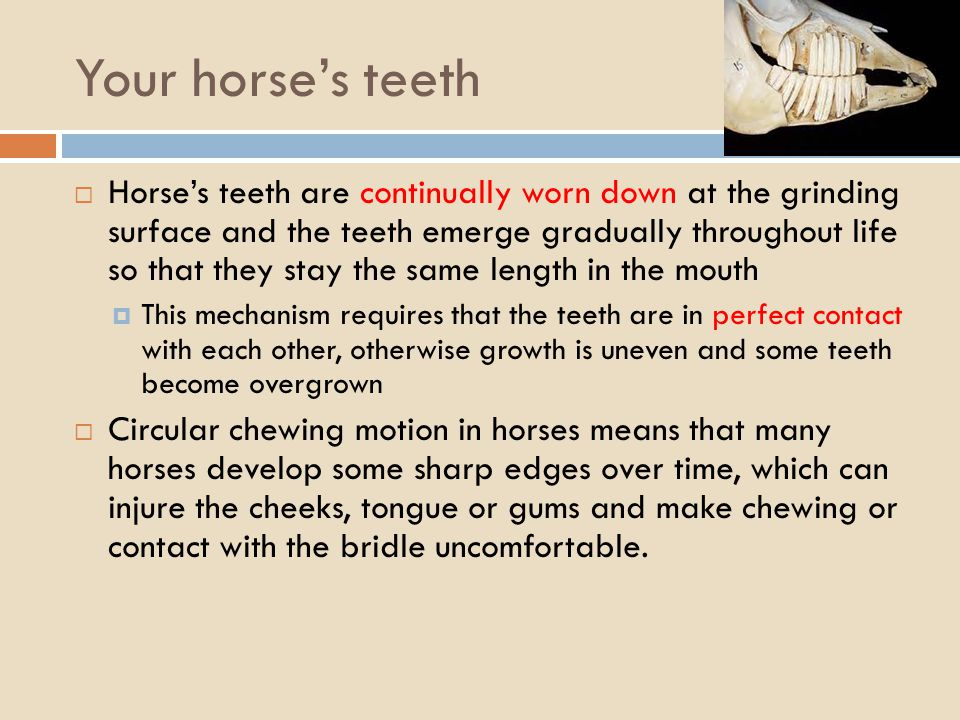 Your horses teeth Horses teeth are continually worn down at the grinding surface and the teeth emerge gradually throughout life so that they stay the