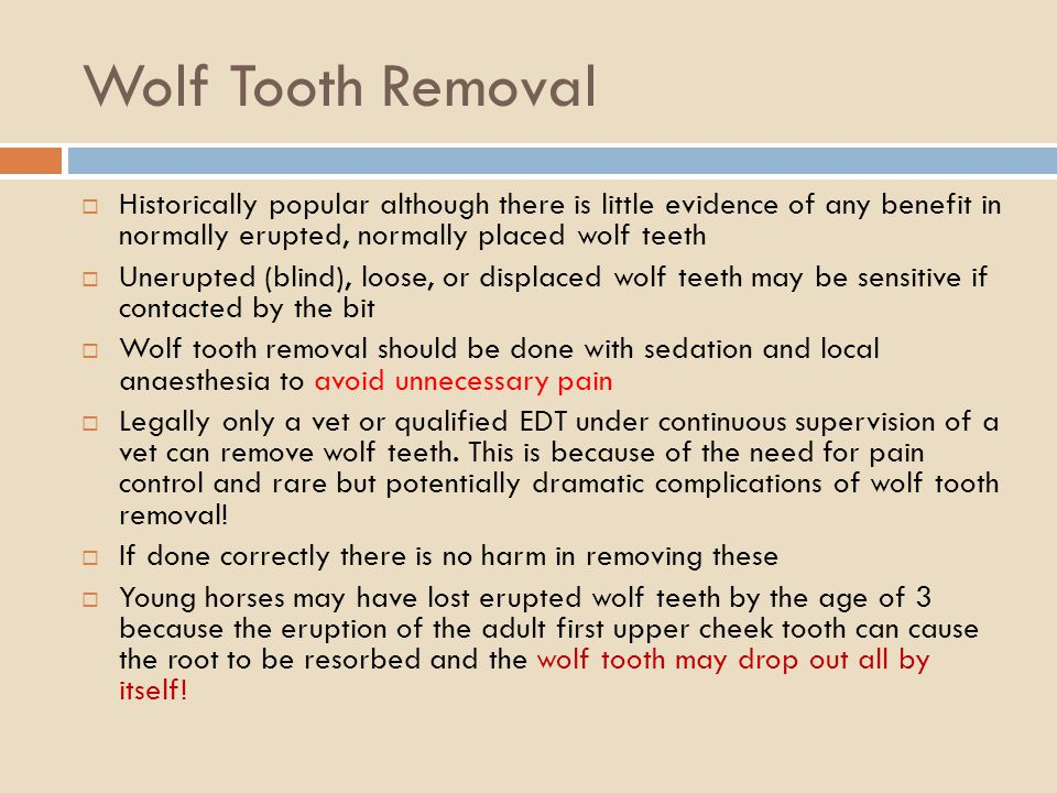 Wolf Tooth Removal Historically popular although there is little evidence of any benefit in normally erupted, normally placed wolf teeth Unerupted (bl