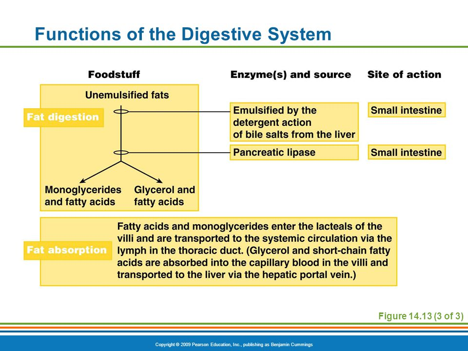Copyright © 2009 Pearson Education, Inc., publishing as Benjamin Cummings Functions of the Digestive System Figure 14.13 (3 of 3)