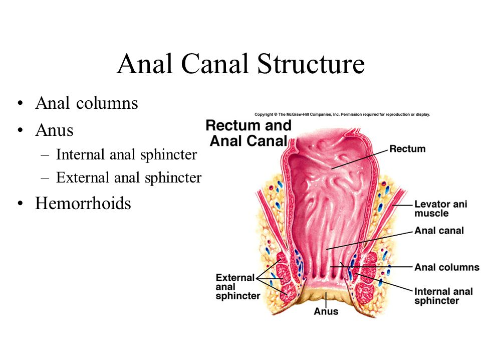 Anal Canal Structure Anal columns Anus –Internal anal sphincter –External anal sphincter Hemorrhoids