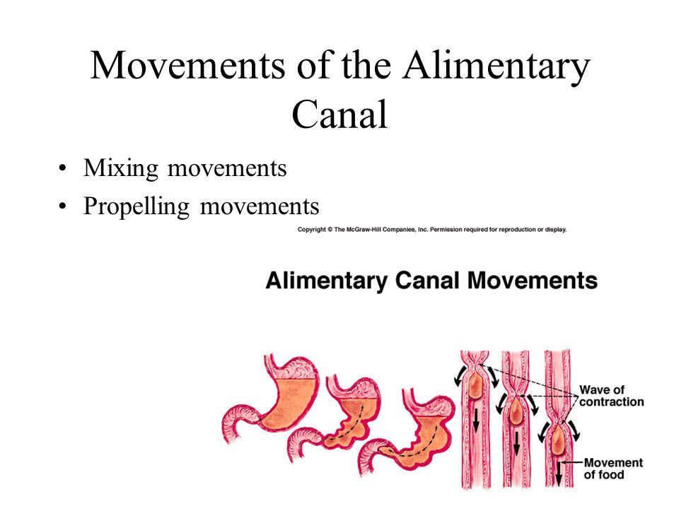 Movements of the Alimentary Canal Mixing movements Propelling movements