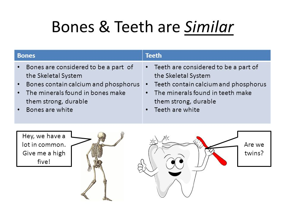 Bones & Teeth are Similar BonesTeeth Bones are considered to be a part of the Skeletal System Bones contain calcium and phosphorus The minerals found in bones make them strong, durable Bones are white Teeth are considered to be a part of the Skeletal System Teeth contain calcium and phosphorus The minerals found in teeth make them strong, durable Teeth are white Hey, we have a lot in common.