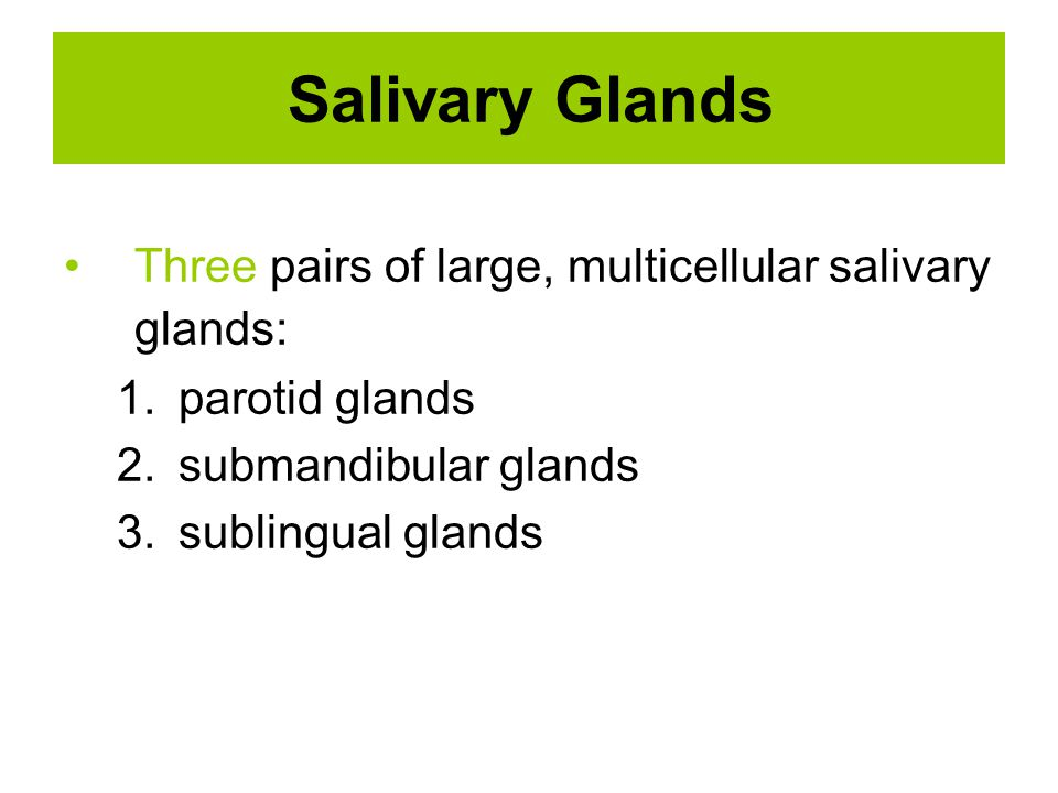 Salivary Glands Three pairs of large, multicellular salivary glands: 1.parotid glands 2.submandibular glands 3.sublingual glands