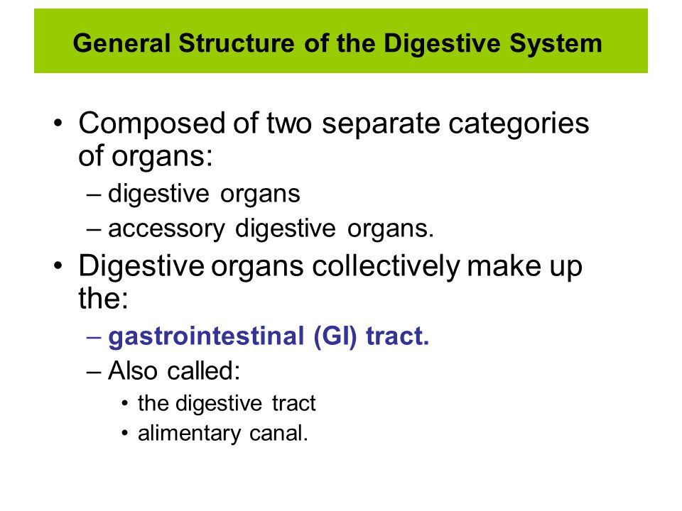 General Structure of the Digestive System Composed of two separate categories of organs: –digestive organs –accessory digestive organs. Digestive orga